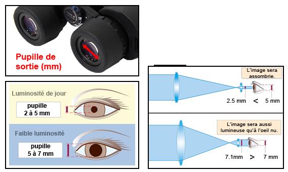 Comprendre l'importance de la pupille de sortie des jumelles